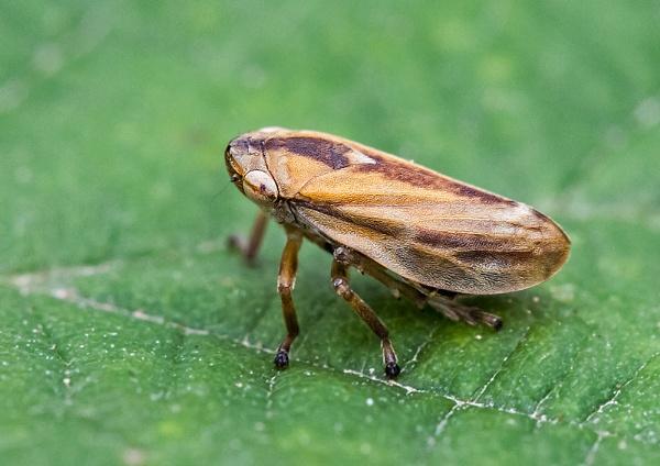 Bug by gary_d