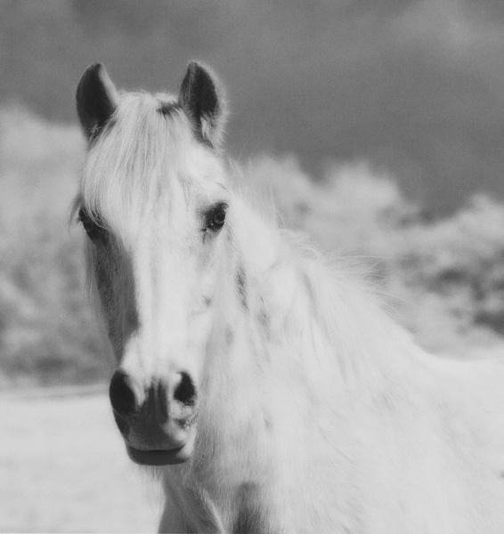 White Horse by john thompson