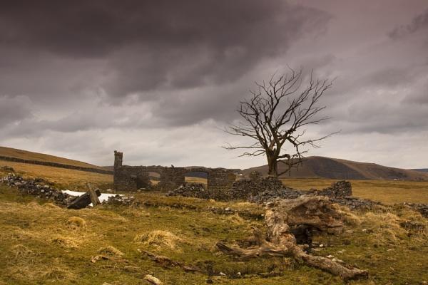 tree ruin by davekeen