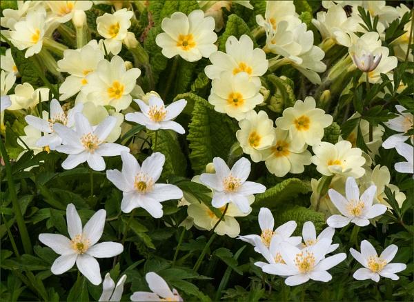 Spring Flowers by paddyman