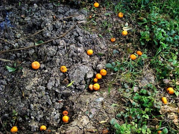 Orange drop! by Danial
