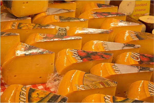 Our cheeses are recommended by connoisseurs