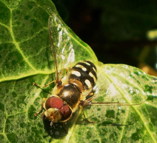 Bugs for Carol... by Chinga