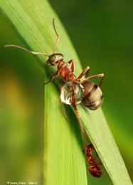 Ant slide