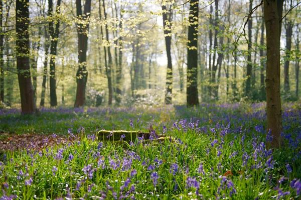 Spring Enlightement by rvoller
