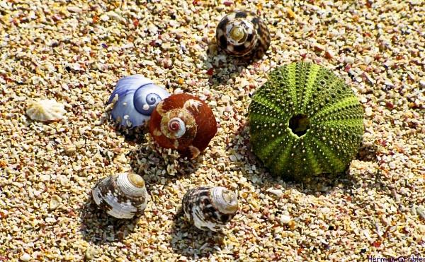 On the Beach by Hermanus
