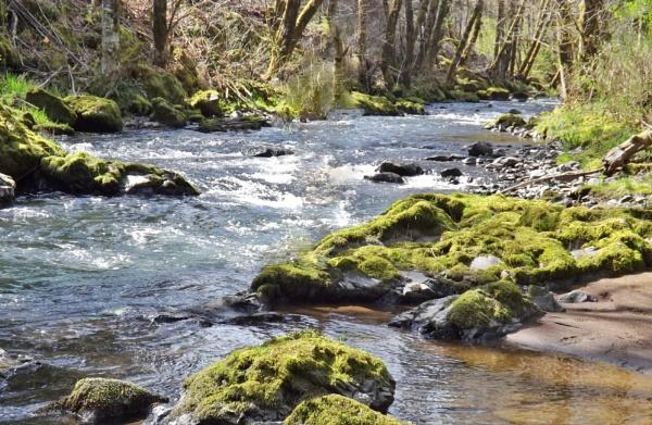 Gales Creek.. by lonnieo