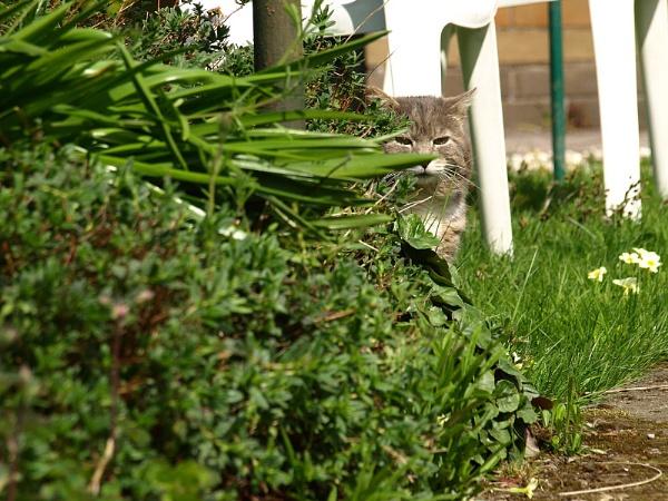 Hide and seek by turniptowers