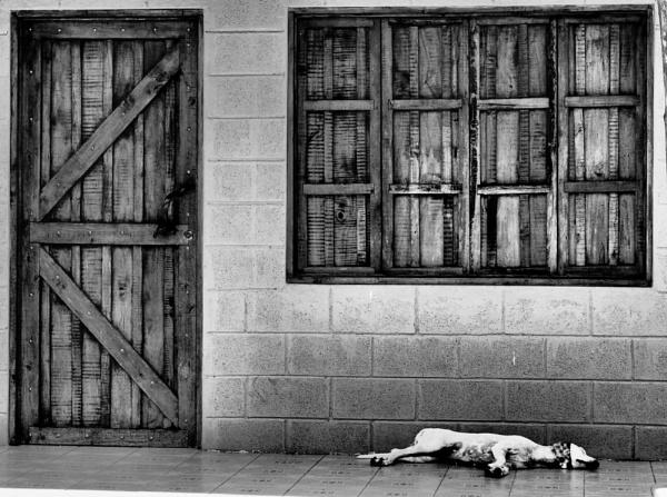 Dog daze by Jallingham
