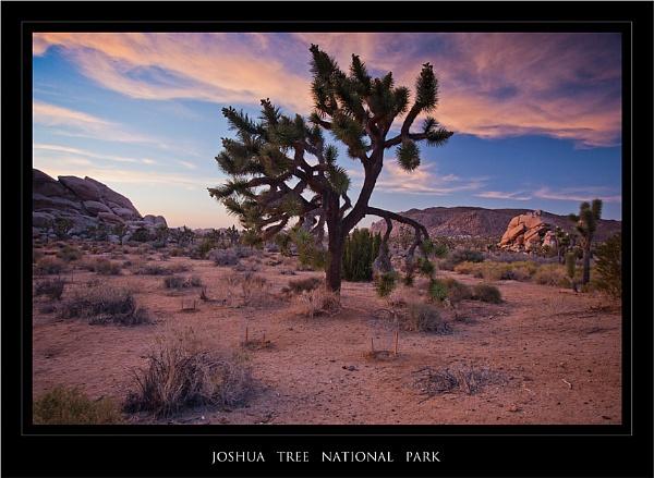 Joshua Tree at Twilight by GillyB