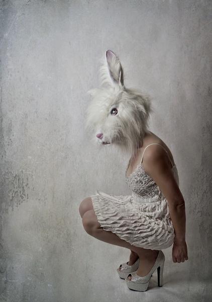 Fluffy Bunny by cattyal