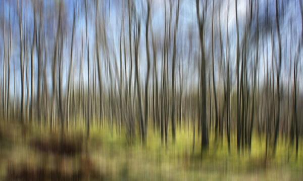 Birch wood by betttynoir