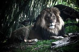 Captive King