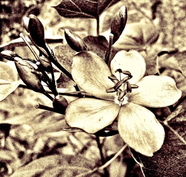 Vintage Macro Flower by gjayesh