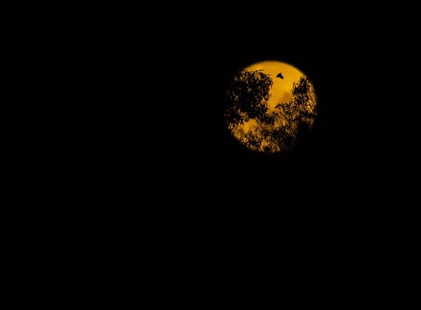 Bad Moon Rising by lesliea