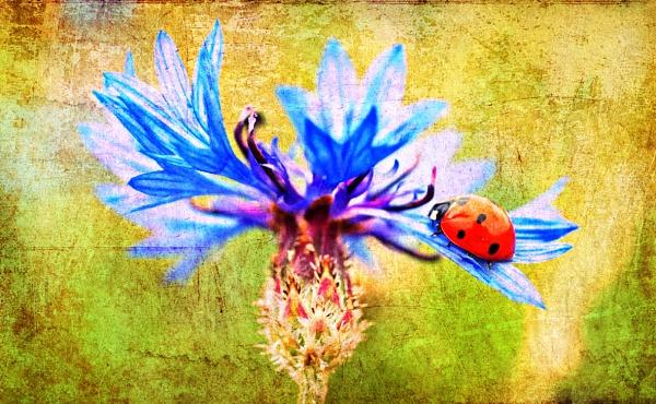 Ladybird by Ian55