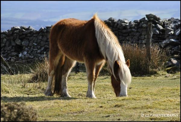 Moorland Pony by catherinekp79