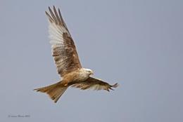 The White Kite