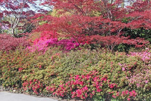 Exbury Gardens, Hampshire (2) by oaklea
