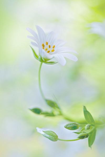 Spring Palette by jackyp