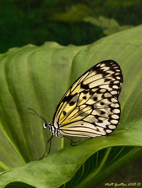 Butterfly by mohikan22