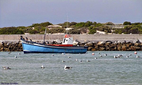 Peaceful Harbour by Hermanus