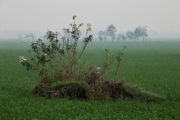 Wild Plant by arhab