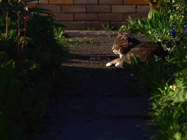 Evening sun by turniptowers