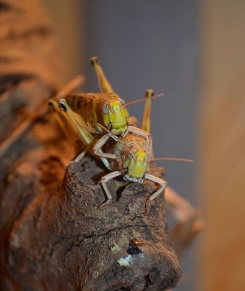 Bug eyes! by Redziggy