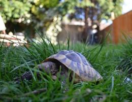 A tortoise eye view!