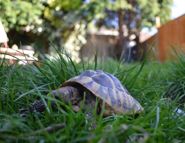 A tortoise eye view! by Redziggy