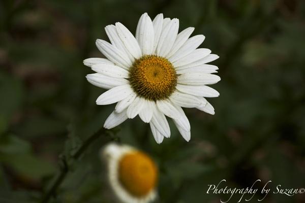 \'alone, once again...\' by PhotographyBySuzan
