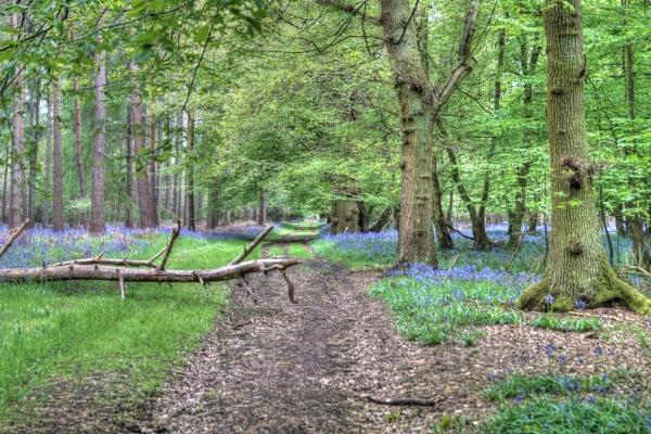 Woodland Track by mark2uk