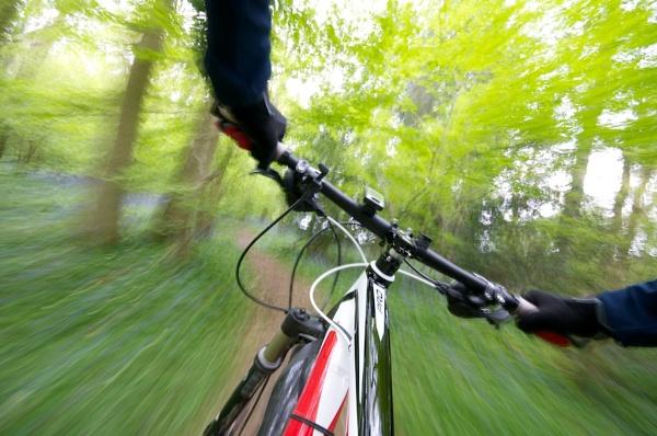 Woodland Ride by jamesh