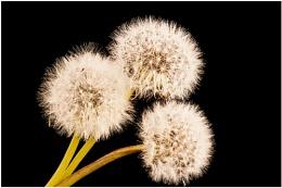 Weed Seed
