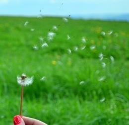 Make a Wish 2 colour