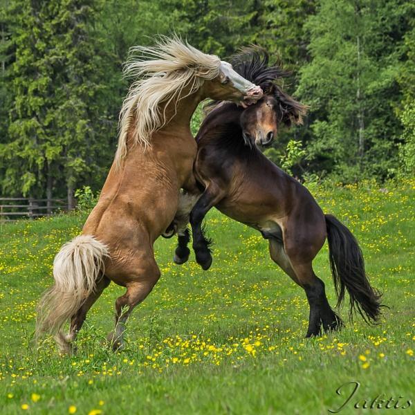 Horsepower by jaktis