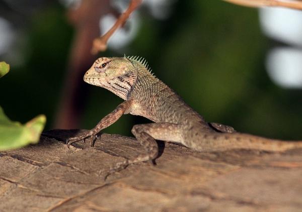 Chameleon by sreejib77