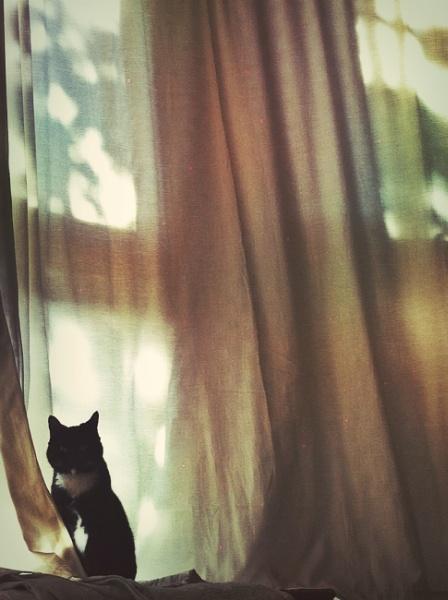 Morning light by ChunkyButFunky