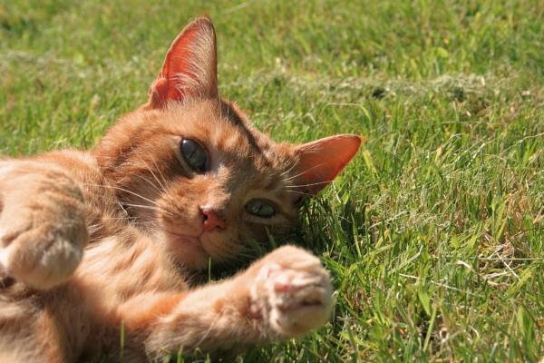 Sunbathing by Tigger1