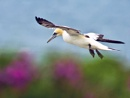 Gliding by terry_cavner