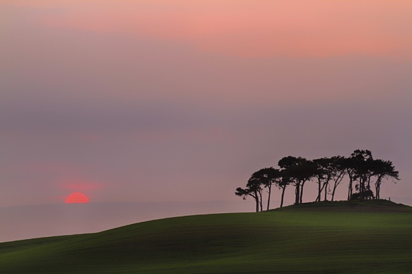 Sunset Trees, Gollanfield, Nairn, revisited (again) by Colin_Leslie