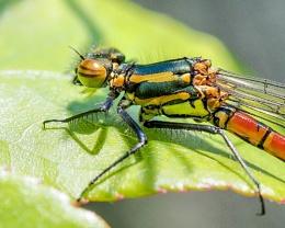 Garden Bug  Macros