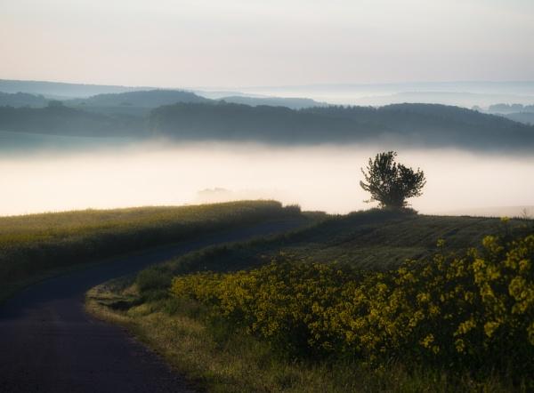 Morning\'s way by mlseawell