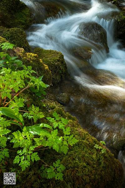 Foss Falls & Foliage
