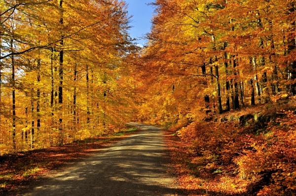 Autumn by gabriel_flr