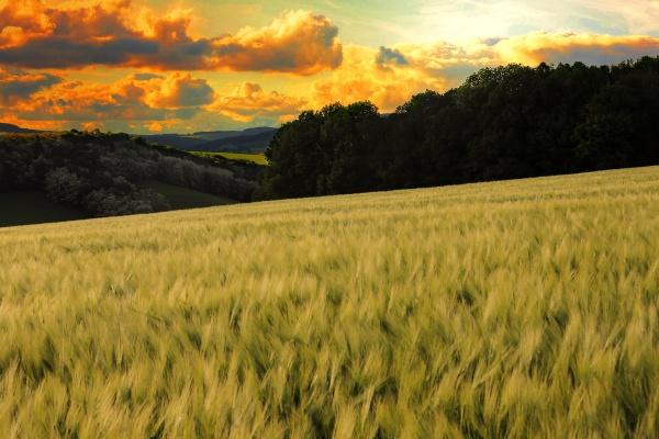 field by IgorKo