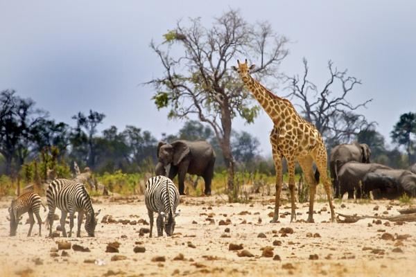 African Scene - Little Makololo - Zimbabwe. by pf