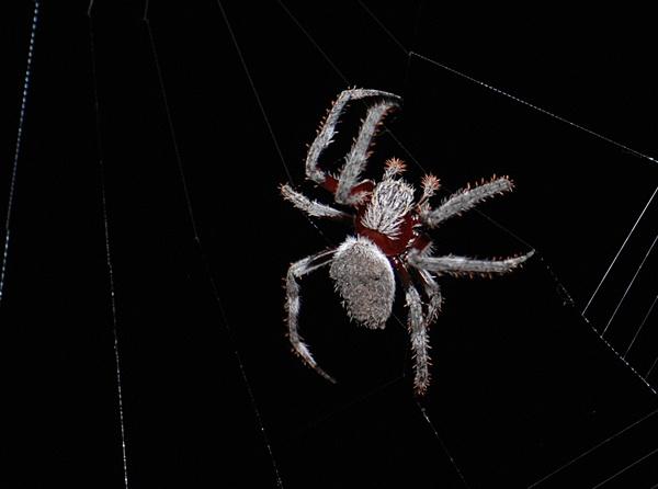 Spider by redboots9
