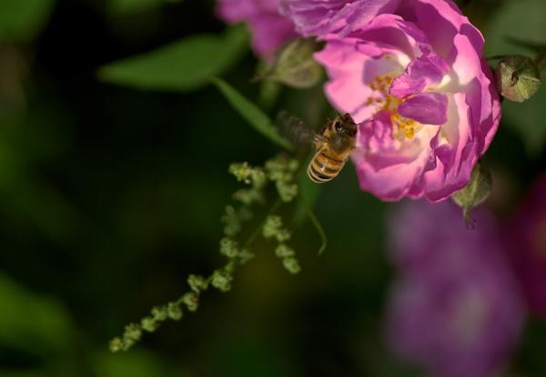 Dancing of the Bee by Newdawei